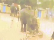 Hãi hùng voi quăng quật, húc chủ tới chết ở Ấn Độ