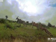 Camera gắn trên lưng báo quay cảnh săn mồi chưa từng có