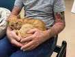 Mèo cưng bất ngờ quay trở về sau 14 năm thất lạc trong cơn bão