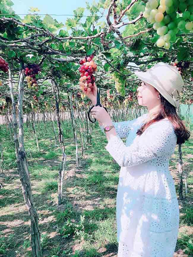 Về Ninh Thuận thỏa thích hái nho đầy túi, lại săn ảnh đẹp mang về - 5