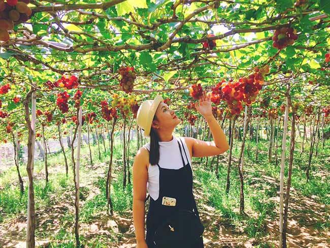 Về Ninh Thuận thỏa thích hái nho đầy túi, lại săn ảnh đẹp mang về - 7