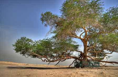 """Những """"kỳ cây"""" lạ lùng nhất thế giới - 1"""