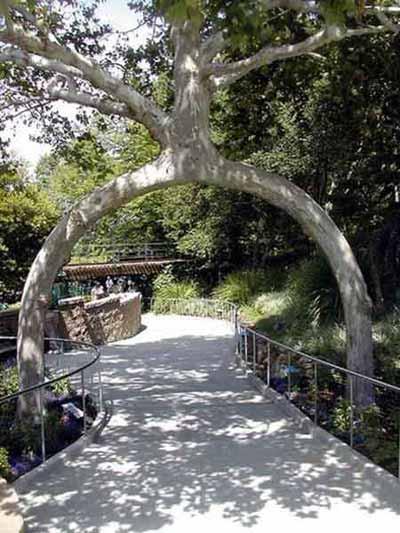 """Những """"kỳ cây"""" lạ lùng nhất thế giới - 3"""