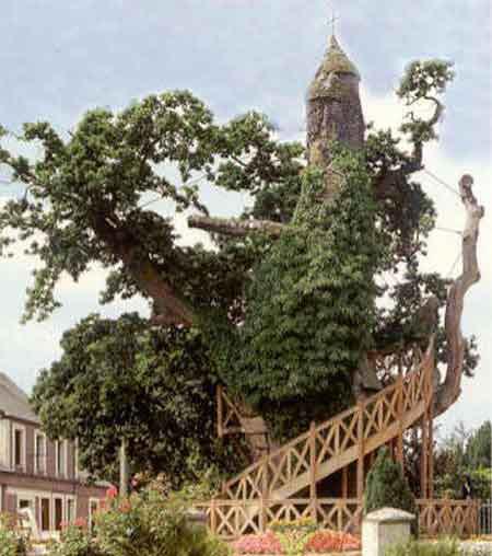 """Những """"kỳ cây"""" lạ lùng nhất thế giới - 6"""