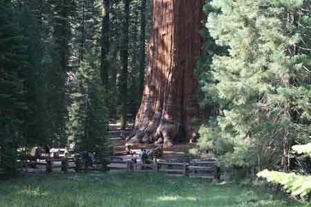 """Những """"kỳ cây"""" lạ lùng nhất thế giới - 10"""