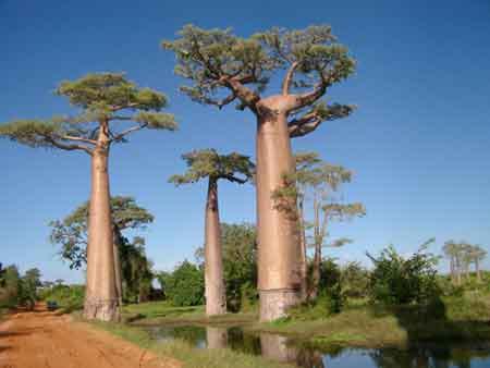 """Những """"kỳ cây"""" lạ lùng nhất thế giới - 8"""