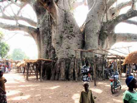 """Những """"kỳ cây"""" lạ lùng nhất thế giới - 9"""