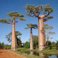 """Những """"kỳ cây"""" lạ lùng nhất thế giới"""