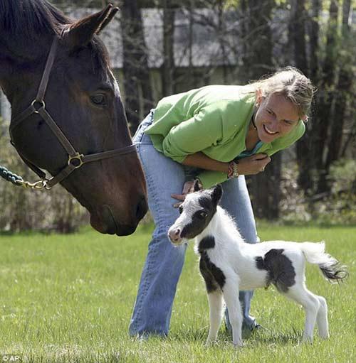 Những chú ngựa nhỏ nhất thế giới - 2