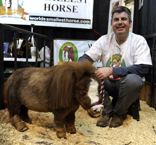 Những chú ngựa nhỏ nhất thế giới - 8