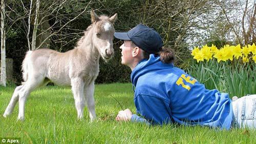 Những chú ngựa nhỏ nhất thế giới - 9