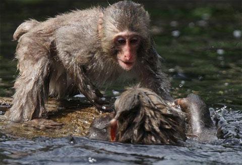 Những hành động lạ của động vật - 3