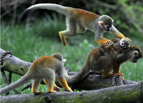 Những hành động lạ của động vật - 5