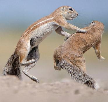 Những hành động lạ của động vật - 6