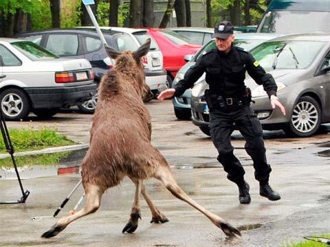 Những hành động lạ của động vật - 7
