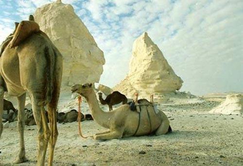 Sa mạc trắng huyền bí ở Ai Cập - 8