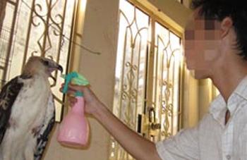 Săn chim 'độc': ở Sài thành muốn là có! - 1