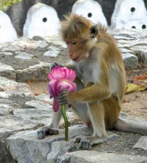 Sri Lanka - Đất nước của sư tử và hoa sen - 3