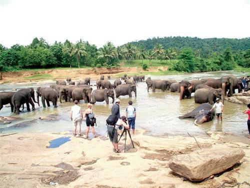 Sri Lanka - Đất nước của sư tử và hoa sen - 4