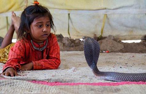 Video: Chơi với… rắn độc - 1