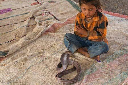 Video: Chơi với… rắn độc - 3