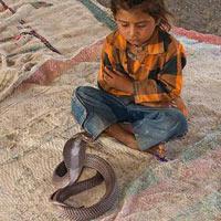 Video: Chơi với… rắn độc