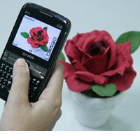 Q-mobile M55 – Vi vu lướt web cùng Wifi