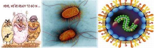 Dinh dưỡng và hệ miễn dịch của trẻ. - 1