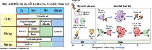 Dinh dưỡng và hệ miễn dịch của trẻ. - 2