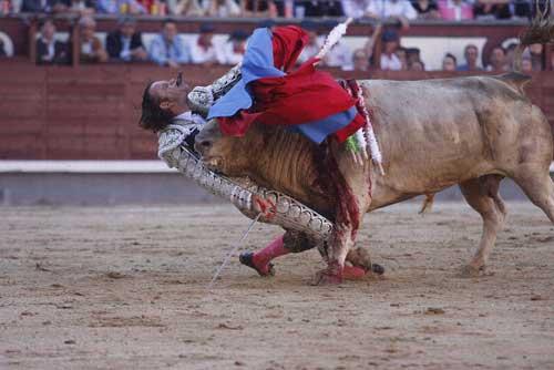Thể thao: Tai nạn kinh hoàng tại môn đấu bò tót - 4