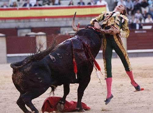Thể thao: Tai nạn kinh hoàng tại môn đấu bò tót - 7