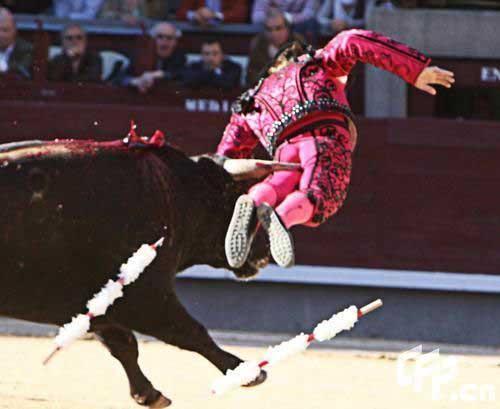 Thể thao: Tai nạn kinh hoàng tại môn đấu bò tót - 9