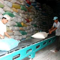 Xuất khẩu gạo lao đao vì đâu?