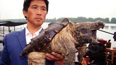 Chú rùa có chiếc mai cá sấu - 1