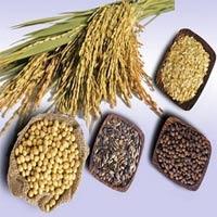 Giá các loại ngũ cốc đồng loạt xuống thấp kỷ lục
