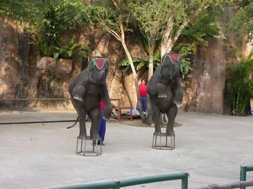 FIDITOUR mở lại tour Thái Lan với chương trình khuyến mãi lớn - 3