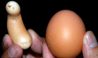 Trứng gà hình quả chuối - 1