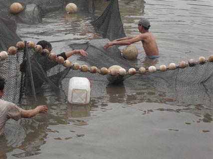 Chùm ảnh: Diễn tập nước rút bắt Cụ Rùa - 10
