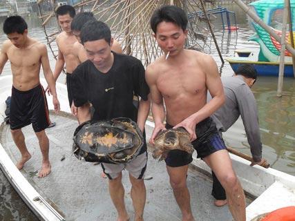 Chùm ảnh: Diễn tập nước rút bắt Cụ Rùa - 14