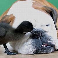 """Khi động vật """"bé cái nhầm"""""""
