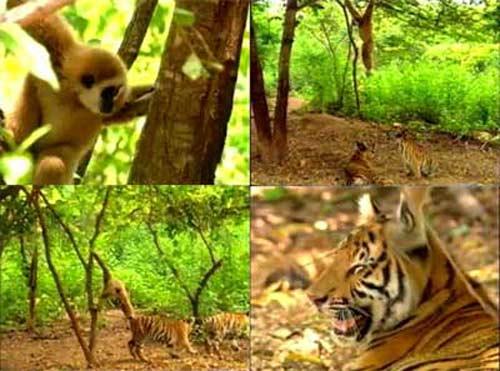 Video: Khỉ chọc ghẹo chúa rừng xanh - 1