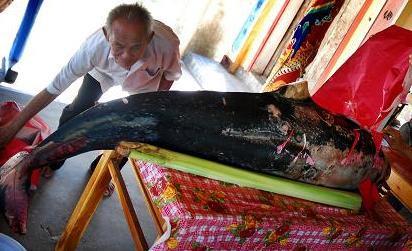 Phú Yên: Cá heo liên tiếp chết dạt vào bờ - 1