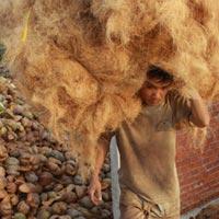 Xứ dừa thiếu dừa, giá tăng mạnh