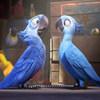 """""""Rio"""" là phim 'nóng' nhất phòng vé năm 2011"""