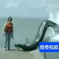 Video: Thủy quái nuốt chửng chó ở biển?