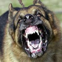 Chó lạ cắn người nguy hiểm ở Lào Cai