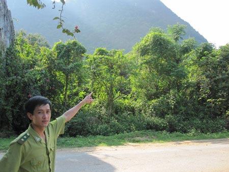 Kì bí rắn khổng lồ bảo vệ rừng quốc gia - 1