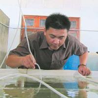 Kỹ sư Việt nuôi hải sâm số một thế giới