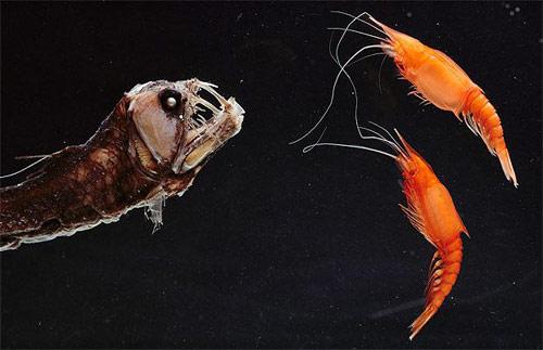 Những loài vật đáng sợ nhất thế giới (P1) - 2