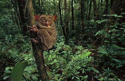 Những loài vật đáng sợ nhất thế giới (P1) - 1